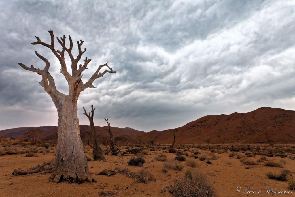 richtersveld-africa-no-water-dead-quiver-tree-1024x683.jpg